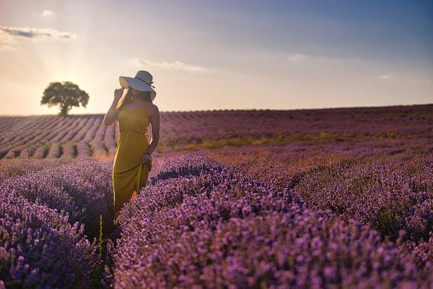 Touristique asiatique dans un champ de lavande en région Provence Alpe Côte d'Azur